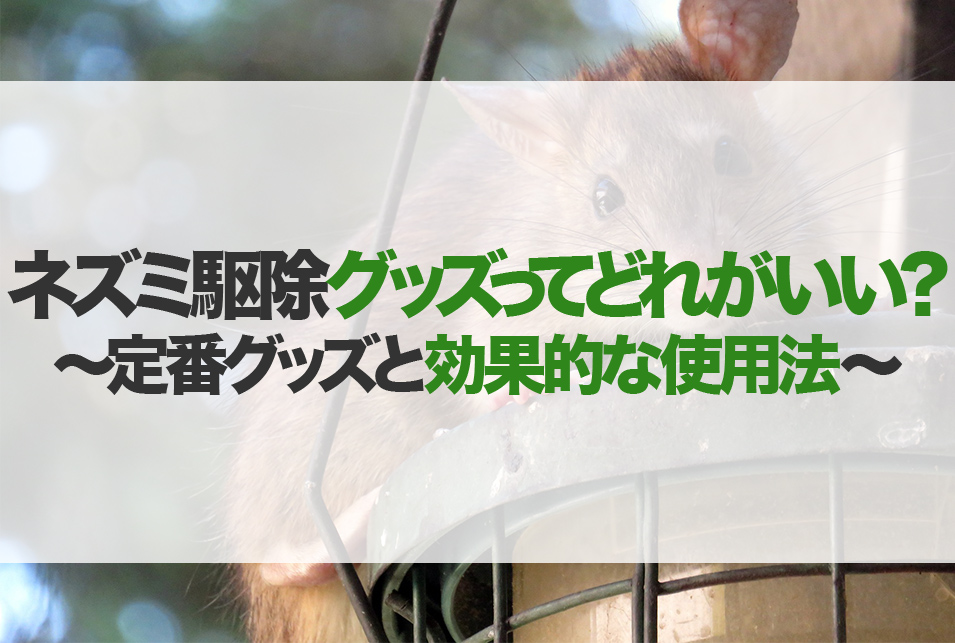 音波 超 ネズミ 駆除