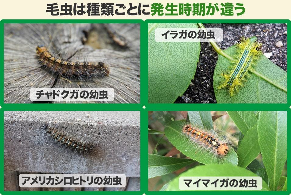 薬 毛虫 駆除 毛虫皮膚炎の症状とは?効果的な薬と意外な感染経路と対処法!