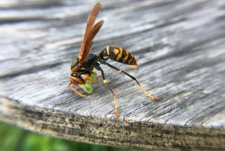 種類 蜂 の