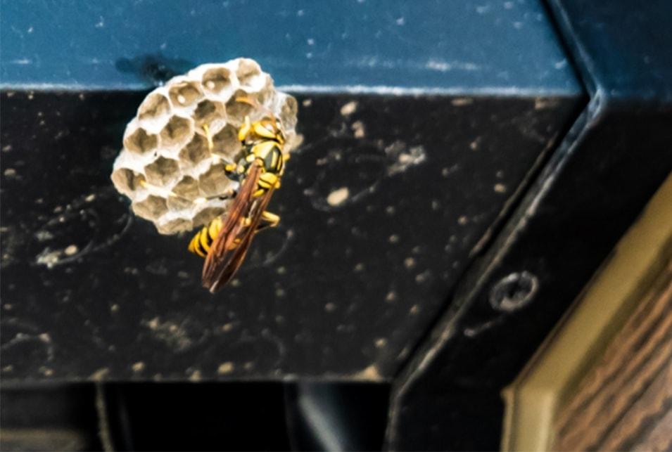 ハチの巣 放置